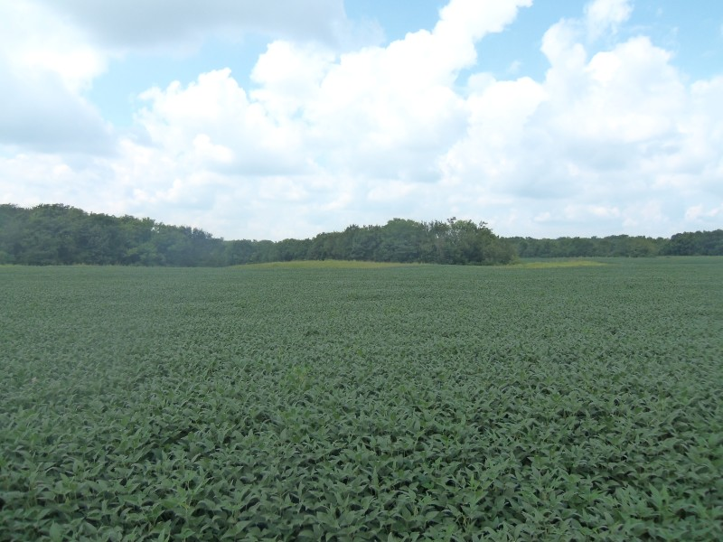 80 Acre Macoupin County Land Auction